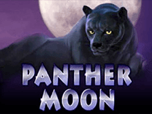 Бесплатные игры Panther Moon